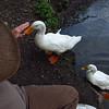 Sonny, up, on bank, beside, me, duck, canal, 2, FB