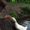 me, Sonny, treats, close, duck, canal, 6