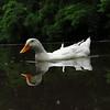 Sonny, duck, june 5, FB