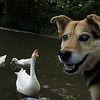 Maddie, Big Guy, goose, canal, smile, close, FB