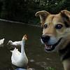 Maddie, Big Guy, goose, canal, smile, close, FB
