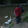children big guy goose ducks