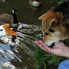 Maddie, Big Guy, goose, canal, treats, close, 2,  FB