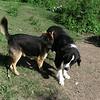 maddie dog sasha towpath, 2