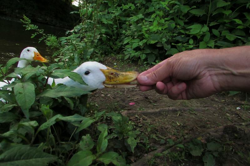 cher treats duck hand canal