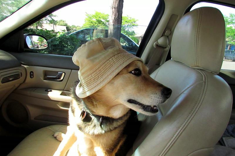 Maddie car my hat