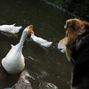 Maddie, Big Guy, goose, canal, stare, close, FB2