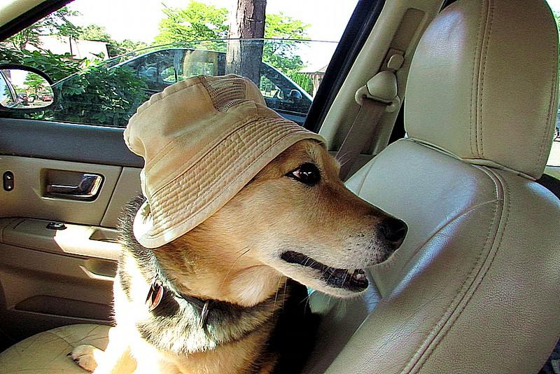Maddie, hat, car, FB