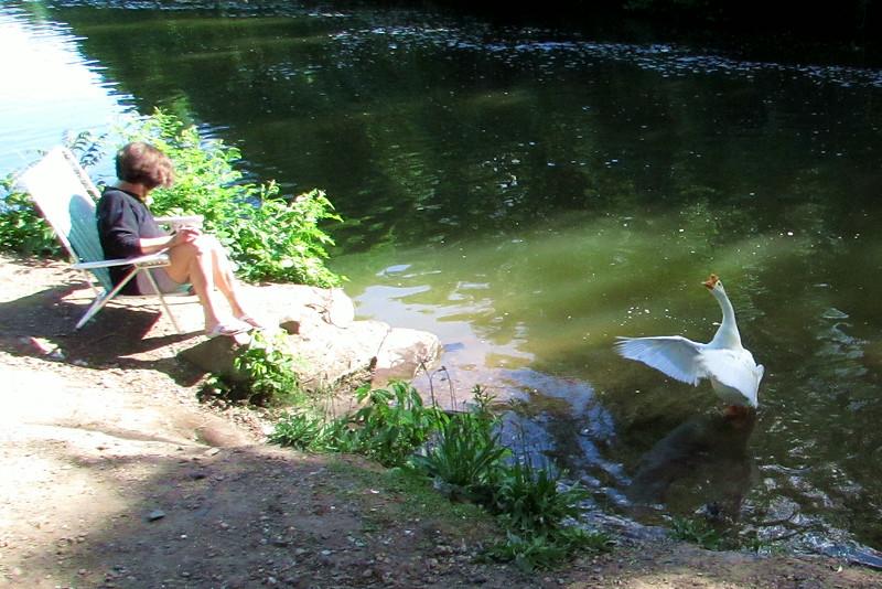 kathi, big guy goose canal wings