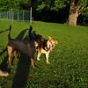 Maddie, jake, boyfriend, towpath, 2