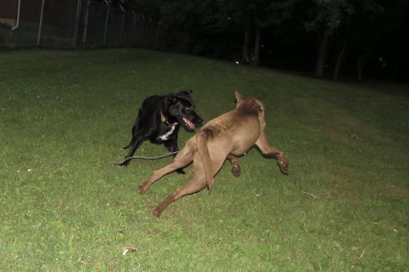 jake dog play