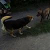 maddie oyfriend dog jake