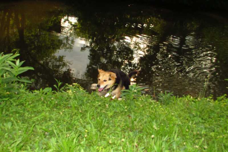 maddie water canal, 3