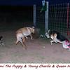 Pepperoni, Charlie, Maddie 2 FB