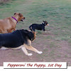 Pepperoni enters chased COVER