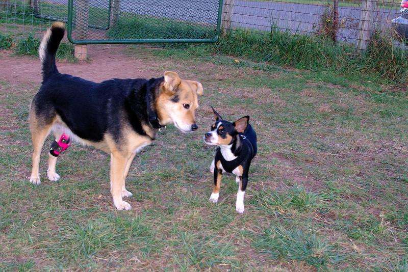 Maddie Pepperoni puppy