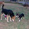 Maddie Pepperoni puppy 2