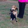 Maddie Pepperoni puppy 3