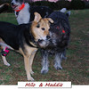 Milo maddie cover