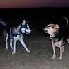 Maddie, Lobo, kingwood, boyfriend