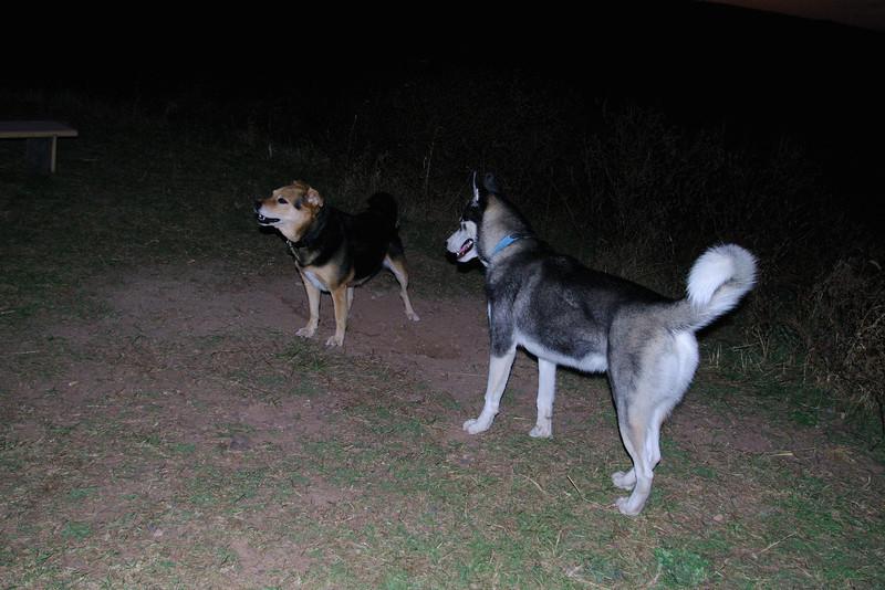 Maddie, lobo, kingwood