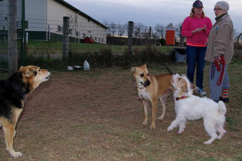 Maddie, Bella, Ezra