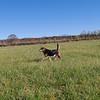 Maddie, field 1