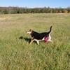 Maddie, field 2