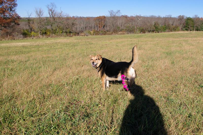 Maddie, field 3