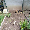 Maddie, toymonkey, lambertville, backyard