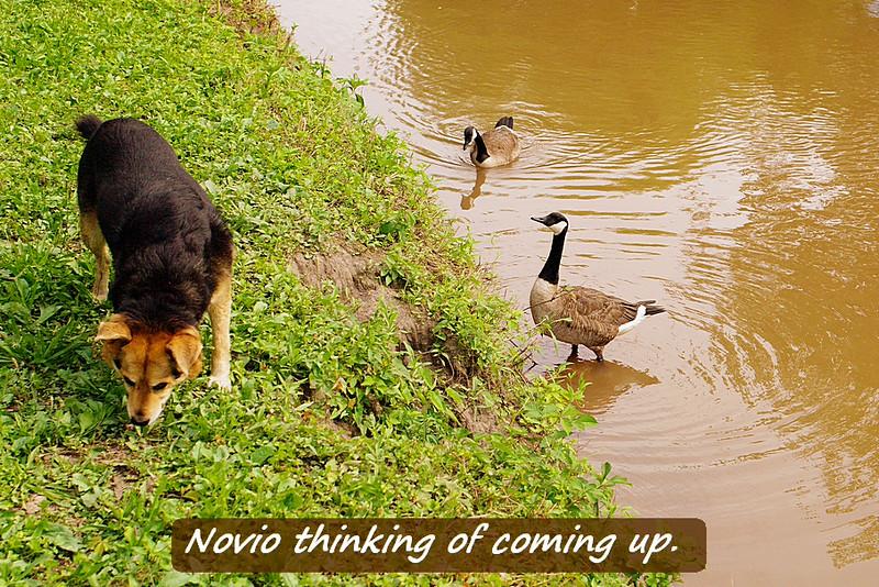Novio, Maddie, poca, look up, canal, 15, FB
