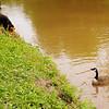 Novio, poca, look up, canal, 14