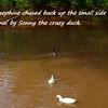 Josephine, Sonny, Cher, Canal, FB