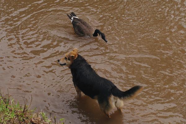FIX novio; maddie; canal; lambertville; goose