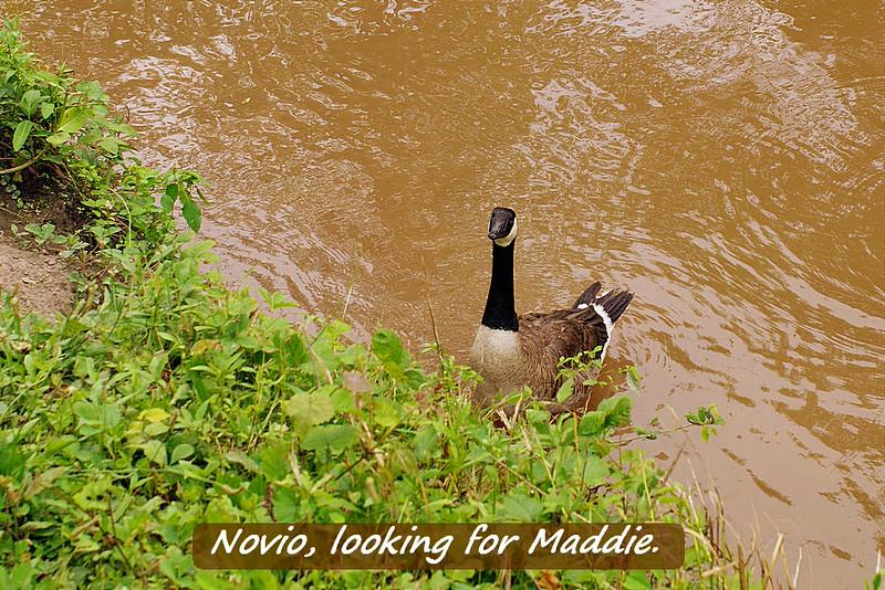 Novio, look up, canal, 19, FB