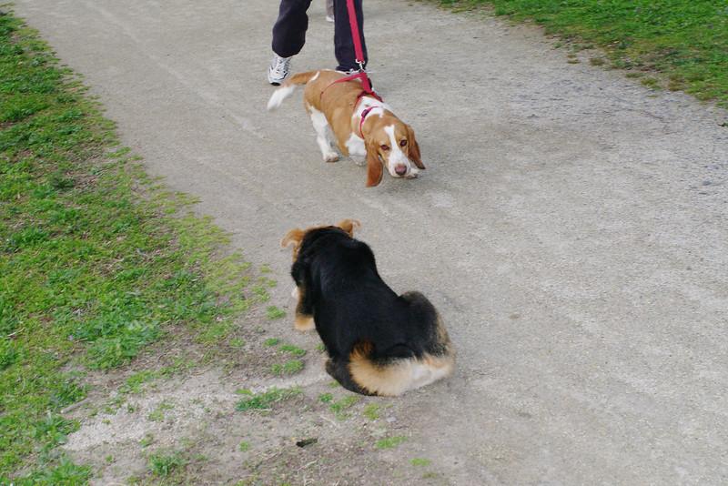 Maddie, kirby, dog, bassett
