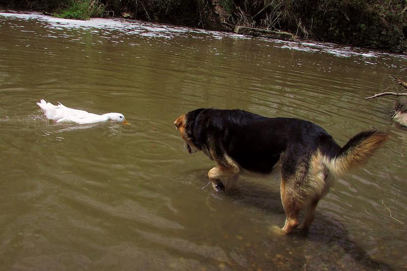 Cher, duck, Maddie, Canal