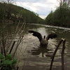 napoleon, wings, portrait, goose, canal, wings