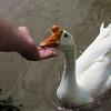 Sheldon, big guy, hand, me, goose, canal, 2