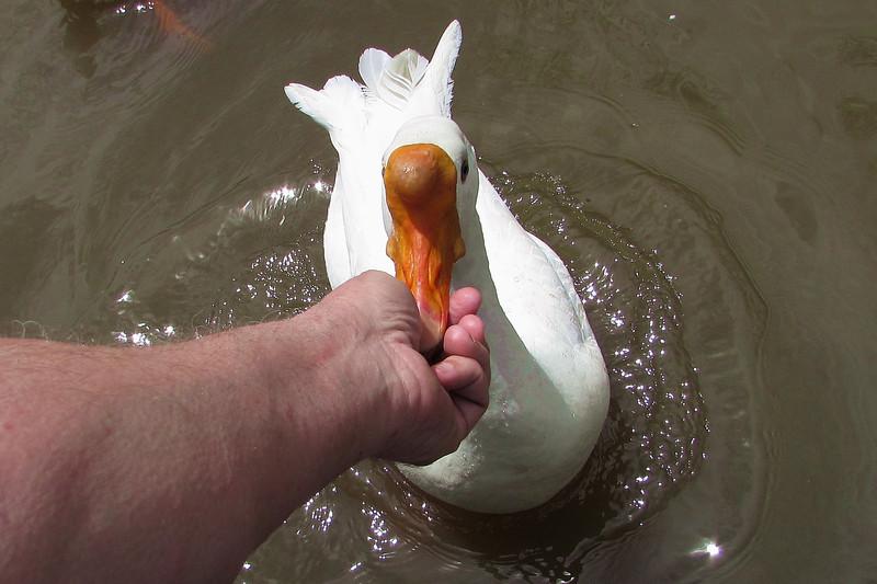Sheldon, big guy, goose, me, hand, treats, canal
