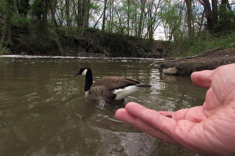 Napoleon, hand, goose, canal
