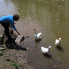 Kathi, duck, goose, canal, 2