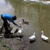 Kathi, duck, goose, canal, 4