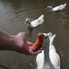 Sheldon, big guy, hand, me, goose, canal, original