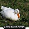 Sonny, duck, ducks, canal, sleep, 2 FB sleeping