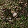 cher egg, 1