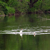 Duck, goose, canal, 5