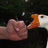 Big Guy, hand, fist, goose, canal