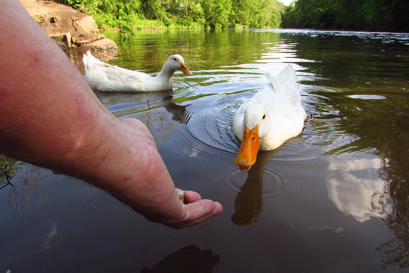 Sonny, duck, treats, hand, canal, 9