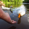 Sonny, duck, treats, hand, canal, 9